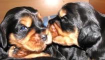 Welpen Minou und Marlin 20.05.2012