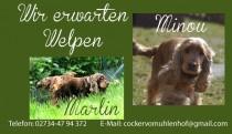 Minou und Marlin Erwarten Welpen